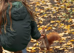 hand-fed squirrel
