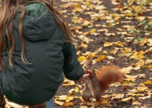 hand-fed squirrel
